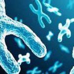 Теломеры и теломераза: влияние ферментов на старение организма!